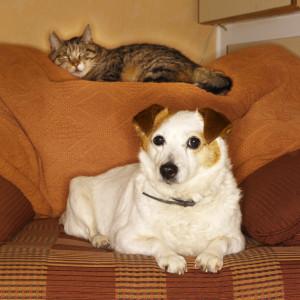 animals-pets